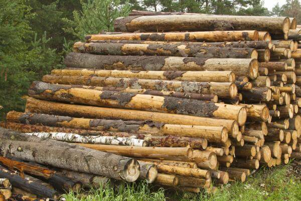Holmen Invests in a Wood Treatment Plant at Braviken Sawmill