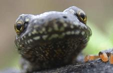 Specialist Surveys for a Greener Tomorrow: Essentials: Avian Ecology