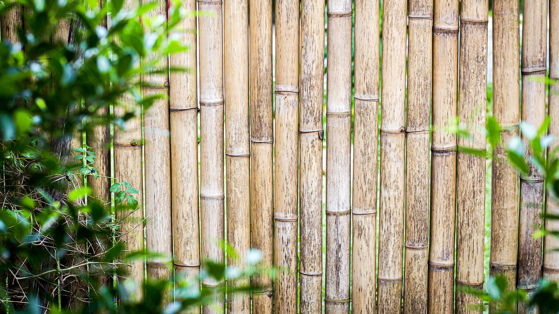construction bamboo