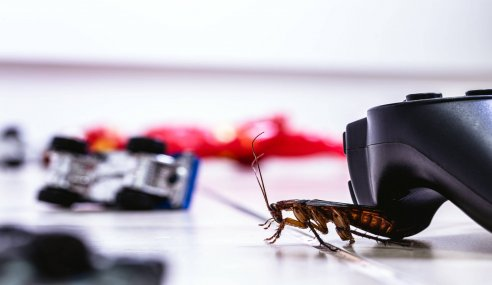 A Guide on How to Prevent and Control Domestic Pest Problems
