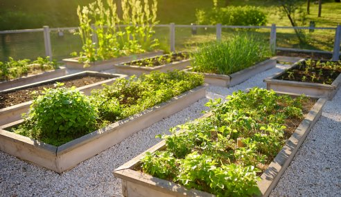 How to Grow a Sustainable Garden
