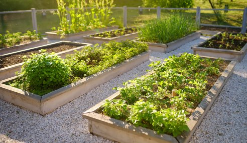 Tips for a more sustainable garden